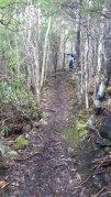 Wellington Falls Track