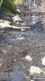 Snow melt bog along Milles Track